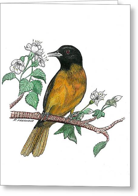 Oriole Greeting Card by Richard Freshour