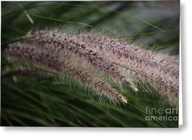 Ornamental Grass Greeting Card by Marjorie Imbeau