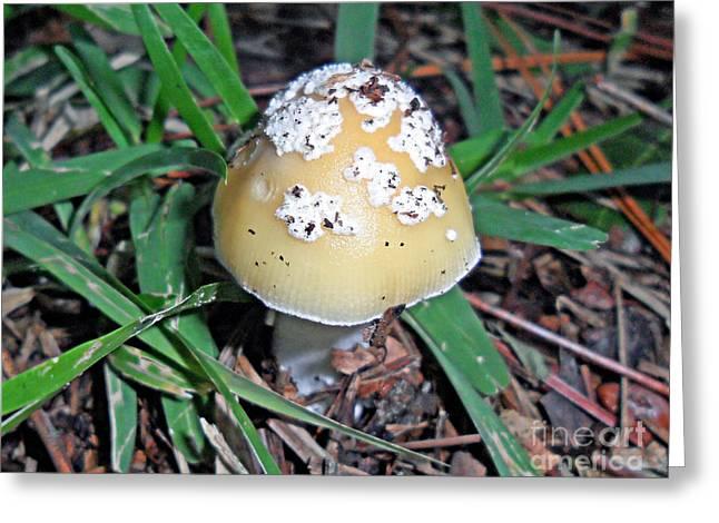 Ornate Mushroom Greeting Card