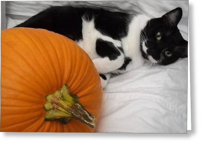 Oslo And The Pumpkin Greeting Card by Marian Hebert