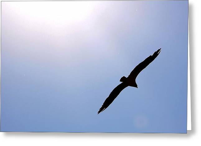 Osprey And The Sun Greeting Card