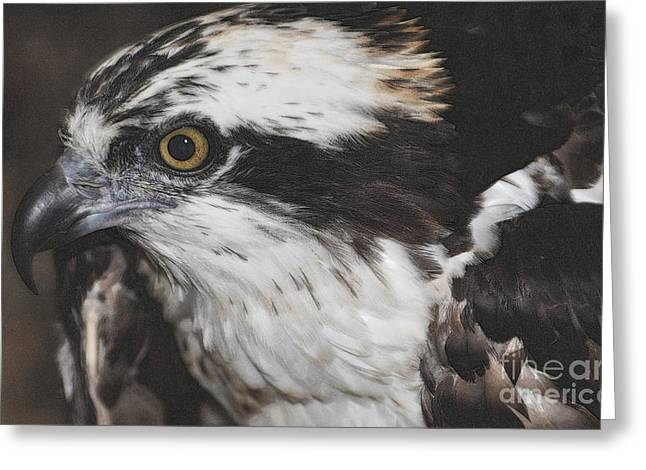 Greeting Card featuring the photograph Osprey by Lydia Holly