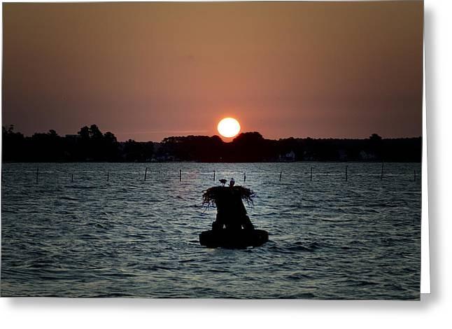 Osprey Sunrise Greeting Card by Bill Cannon