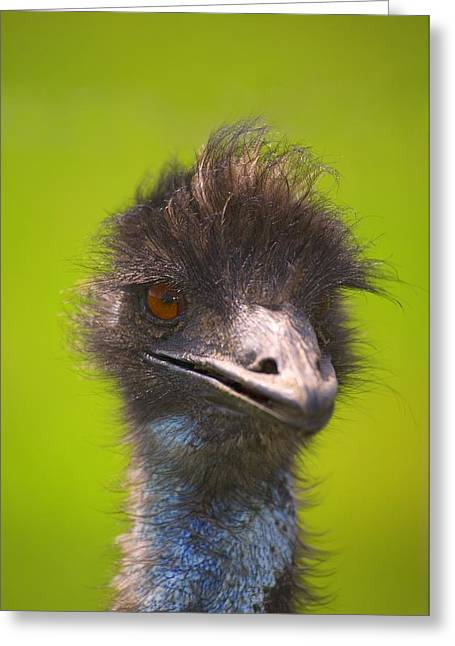 Ostrich Greeting Card by Carson Ganci