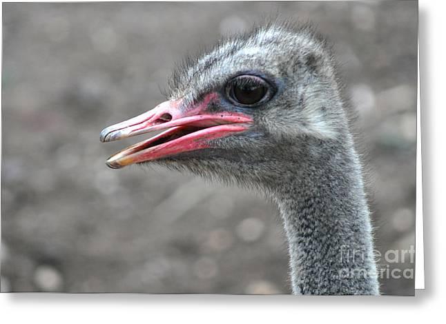 Ostrich Head Greeting Card by Joanne Kocwin