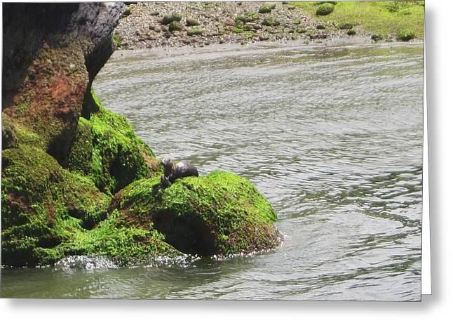 Greeting Card featuring the photograph Otter In Bellingham Bay by Karen Molenaar Terrell