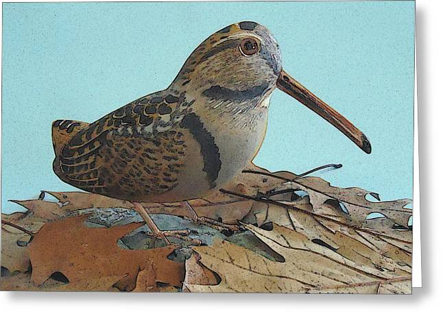 Our American Woodcock Greeting Card