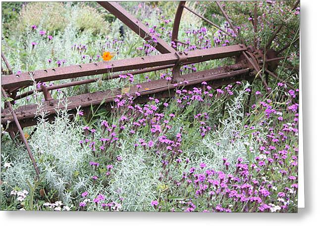 Greeting Card featuring the photograph Out Of Danger Nb by Susan Alvaro