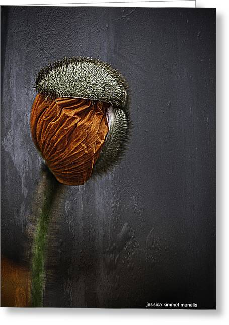 Out Of Darkness Grows Flowers Greeting Card by Jessica Manelis