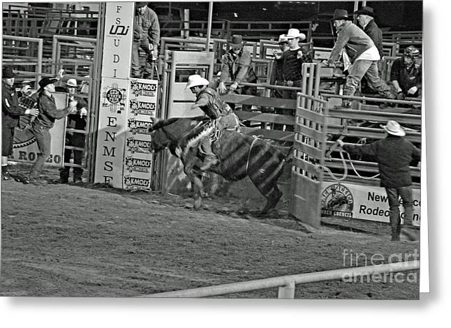 Out Of The Chute Greeting Card by Shawn Naranjo
