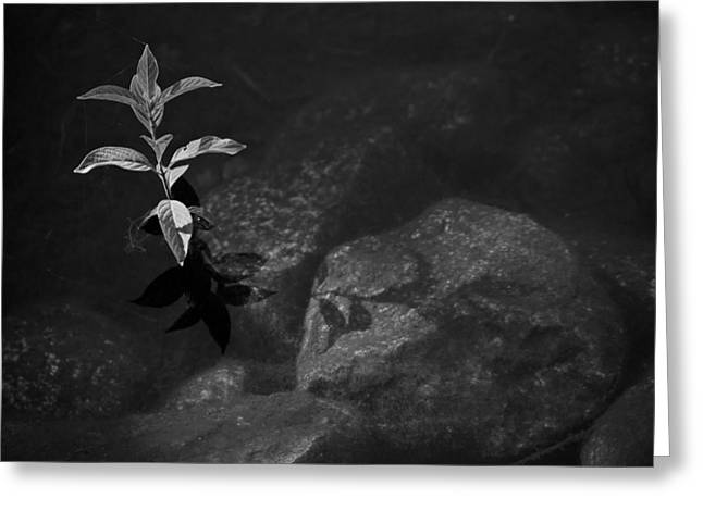 Out Of The Water Comes Shadows Bw Greeting Card by Karol Livote