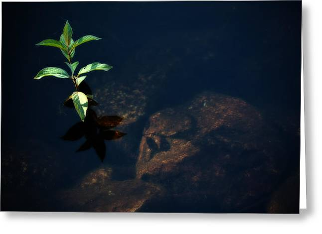 Out Of The Water Comes Shadows Greeting Card by Karol Livote