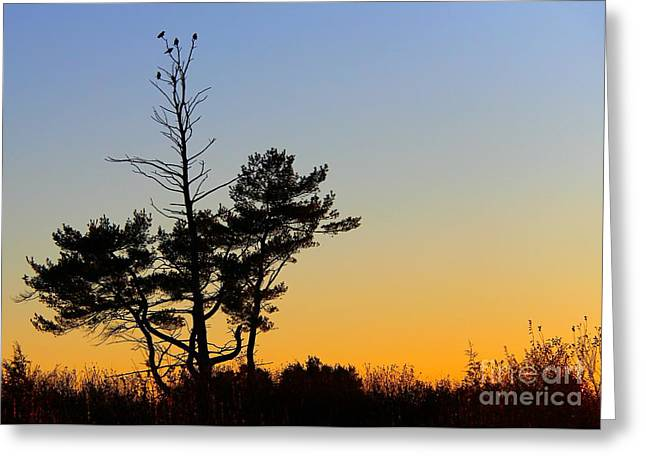 Greeting Card featuring the photograph Out On A Limb by Davandra Cribbie