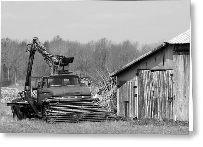 Out To Pasture Greeting Card by Mark J Seefeldt