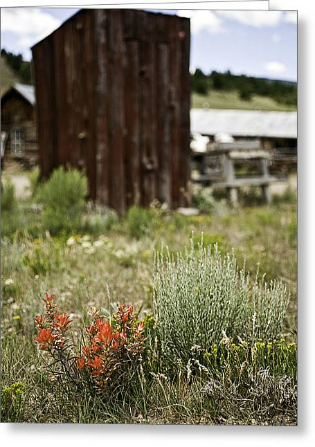 Outhouse Path Greeting Card by Melany Sarafis