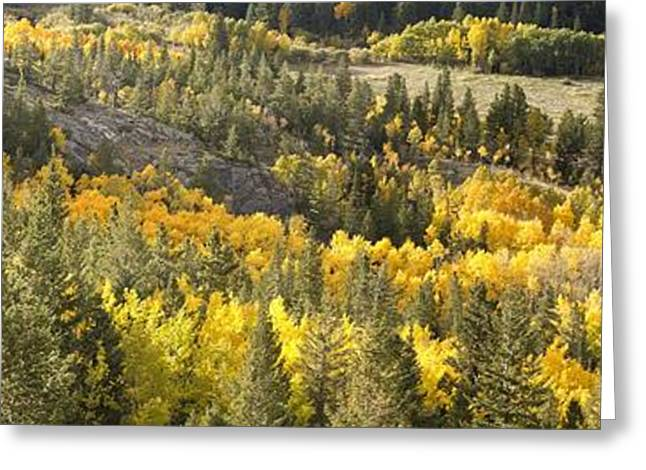 Outside Nederland Co Greeting Card by Larry Darnell