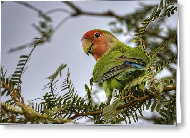 Over My Shoulder  Greeting Card by Saija  Lehtonen