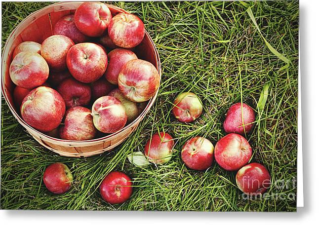 Overhead Shot Of A Basket Of Freshly Picked Apples Greeting Card by Sandra Cunningham