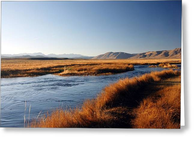 Owens River Greeting Card by Michael Courtney