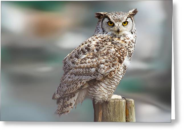 Owl Love Greeting Card by Naman Imagery