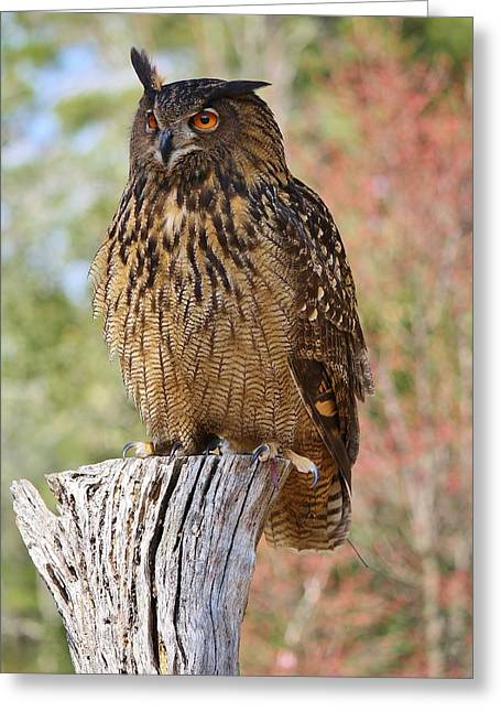 Owl Greeting Card by Paulette Thomas