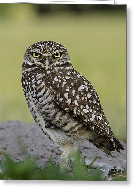 Owl Stare Greeting Card
