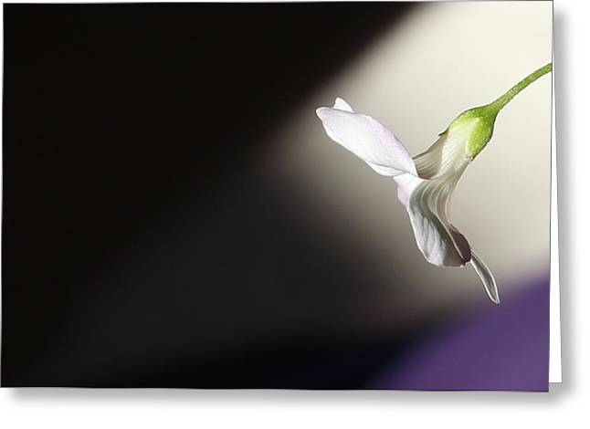 Oxalis Bloom Greeting Card by Kume Bryant