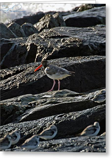Oyster On The Rocks Greeting Card