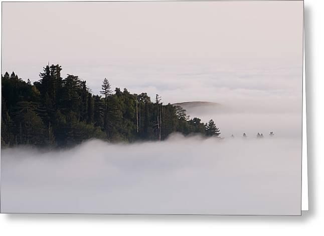 Pacific Coast Fog Shrouding The Redwood Greeting Card