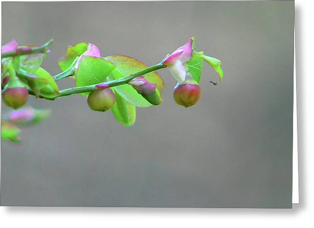 Pacific Huckleberry Greeting Card by Pamela Patch
