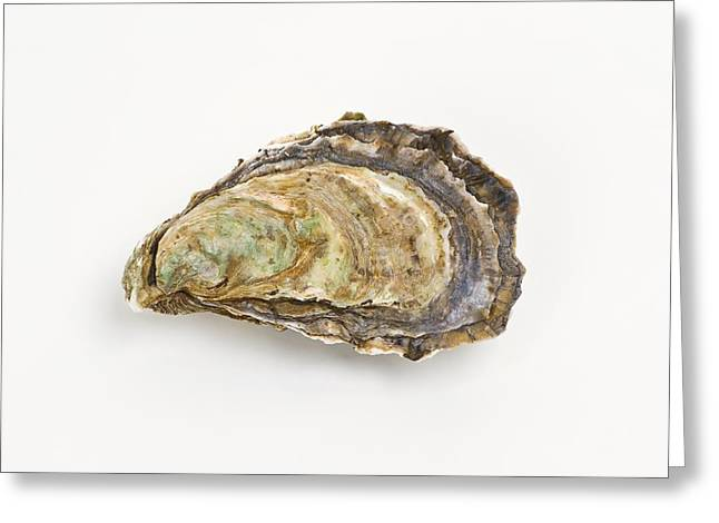 Pacific Oyster Greeting Card by David Nunuk