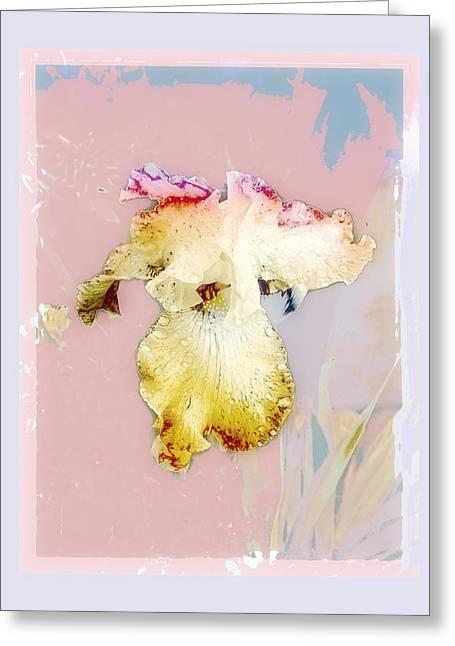 Painted Iris Greeting Card by Karen Lynch