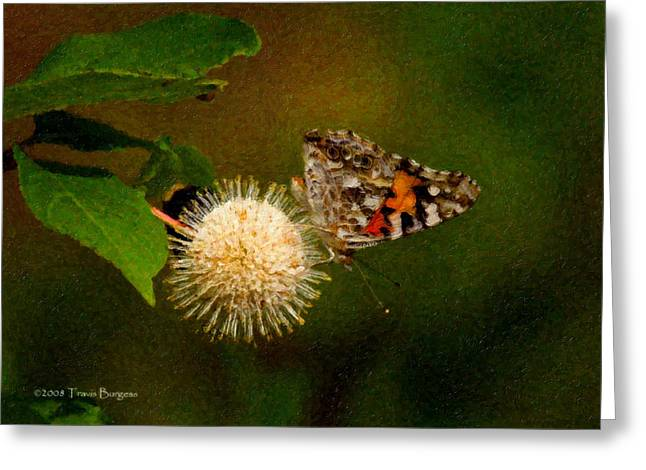 Greeting Card featuring the photograph Painted Lady Impasto by Travis Burgess