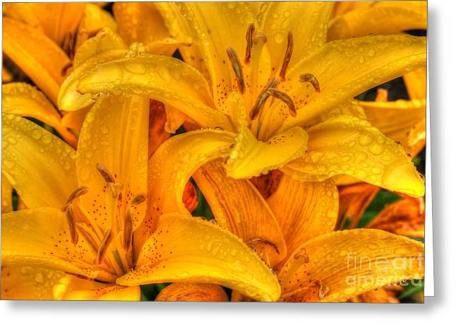 Painted Lily Greeting Card by Tap On Photo