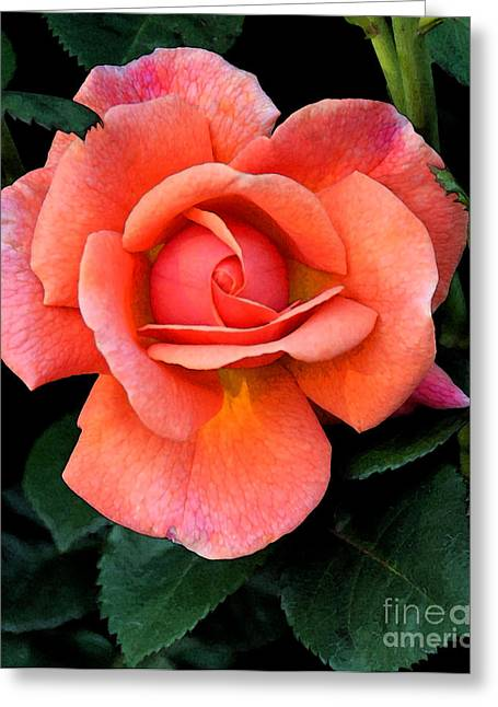 Greeting Card featuring the photograph Painted Rose by Cindy Manero