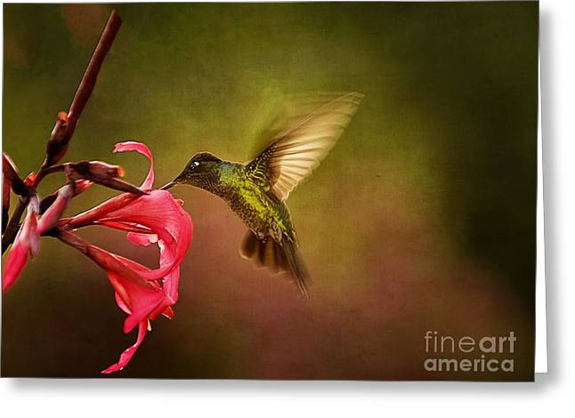 Painterly Hummingbird #1 Greeting Card by Anne Rodkin