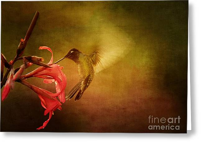 Painterly Hummingbird #2 Greeting Card by Anne Rodkin