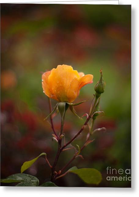Painterly Yellow Rose Greeting Card by Mike Reid