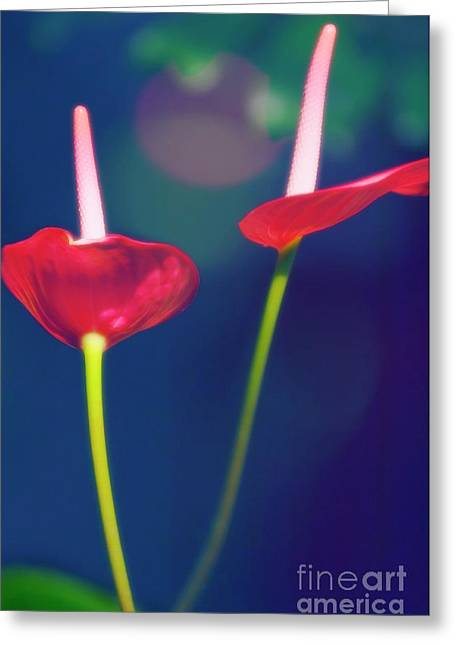 Painter's Palette (anthurium Andraeanum) Greeting Card by Maria Mosolova