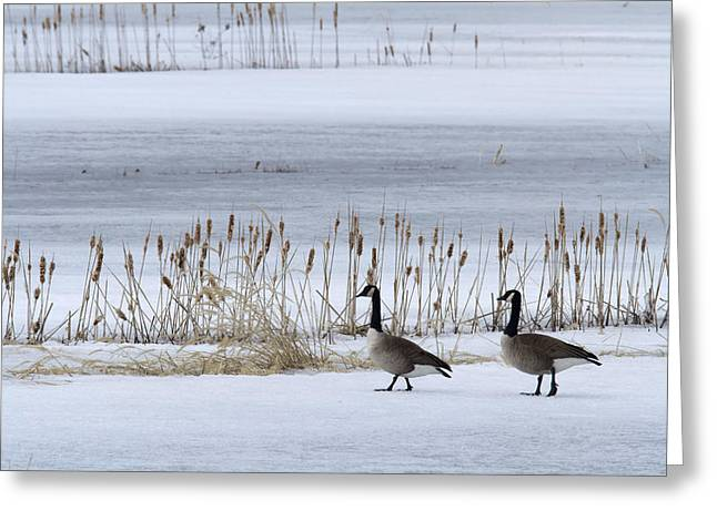 Pair Of Canada Geese Walking Greeting Card by Philippe Henry