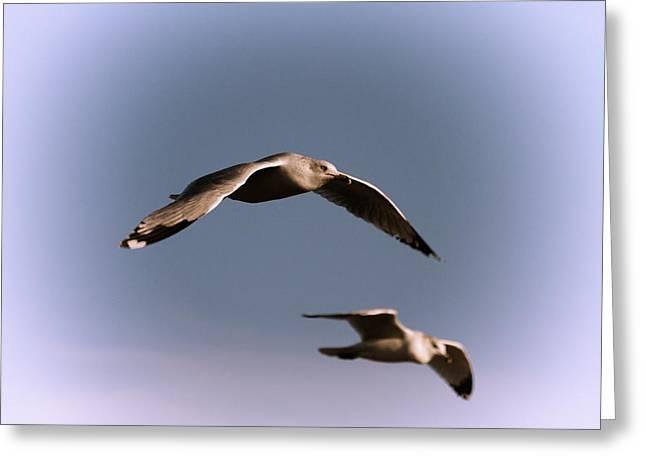 Pair Of Gulls Greeting Card by Karol Livote