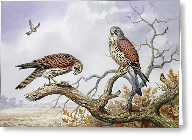 Pair Of Kestrels Greeting Card by Carl Donner