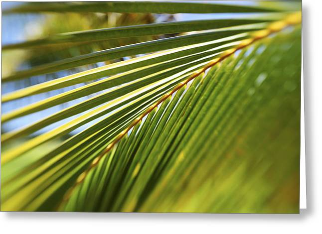 Palm Detail Greeting Card by Vince Cavataio - Printscapes