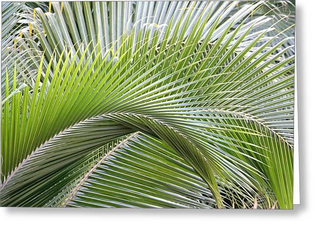 Palm Frawns Greeting Card by Melanie Beasley