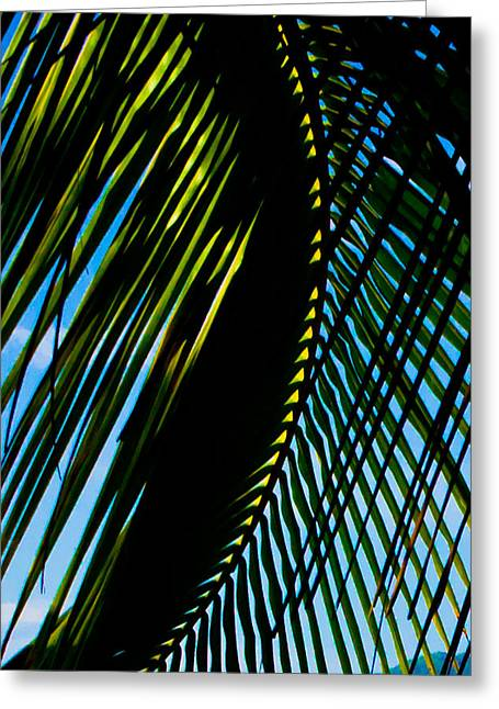 Palm Frond Curve Greeting Card by Anthony Doudt