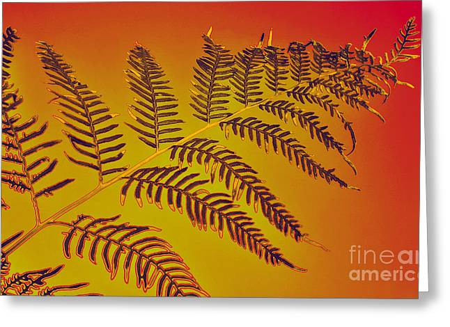 Palm Frond In The Summer Heat Greeting Card by Kaye Menner