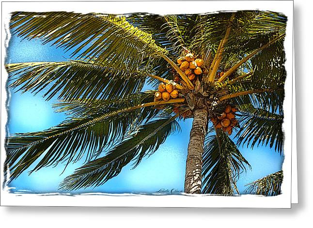 Palm Fronds Greeting Card by Linda Olsen