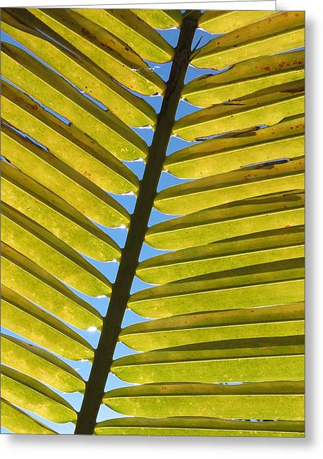 Palm Leaf Greeting Card by Chris Andruskiewicz