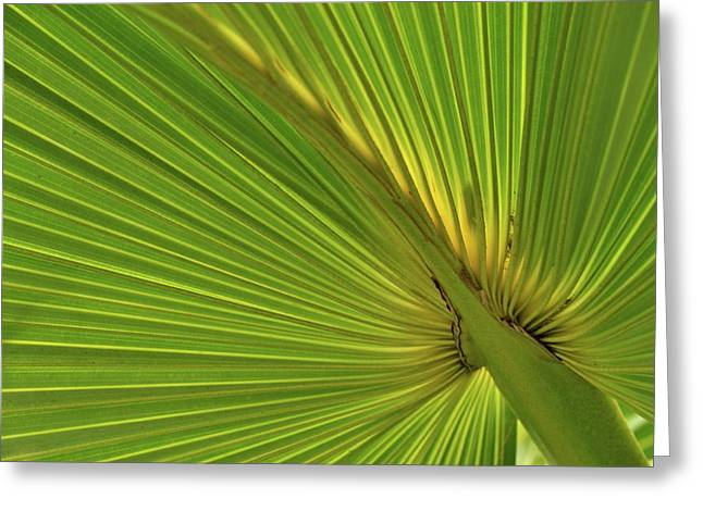 Greeting Card featuring the photograph Palm Leaf II by JD Grimes