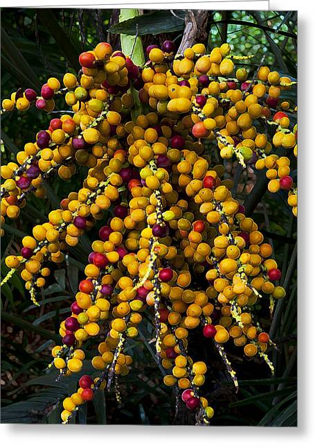 Greeting Card featuring the photograph Palm Seeds Baroque by Steven Sparks